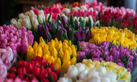 4 Ways to use Colour Effectively in Spring/Summer Marketing