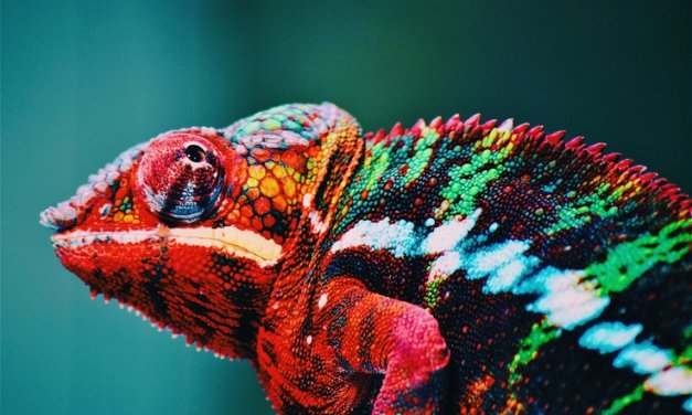 Colour: an essential tool in your print marketing campaign